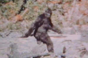 Big-Foot-filmed-by-Roger-Patterson-in-Bluff-Creek-in-1967