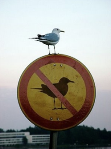 bird-breaking-the-rules