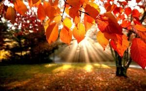Fall_leaves-4